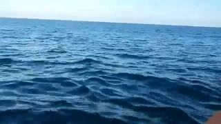 PESCANDO ATUNES ALBACORA EN GALÁPAGOS